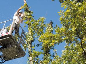 Elagage d'arbre à Saint Hilaire de Riez par Rataud