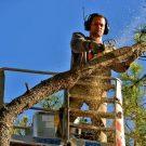 Abattage d'arbre bretignolles sur mer