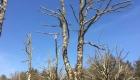 chantier élagage arbre à Soullans