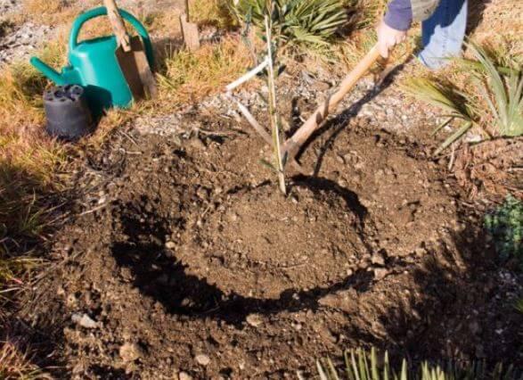 Technique de la cuvette - 3 conseils pour l'entretien du jardin à Saint Hilaire de Riez